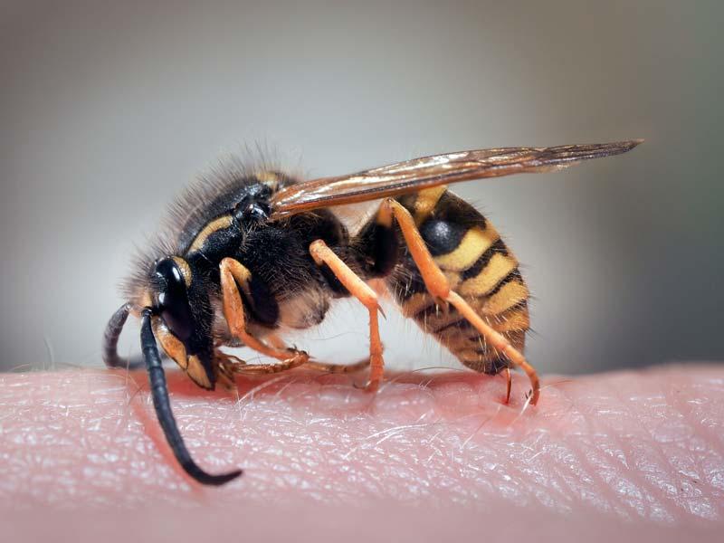 vespa che punge