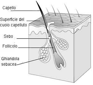 struttura-capelli