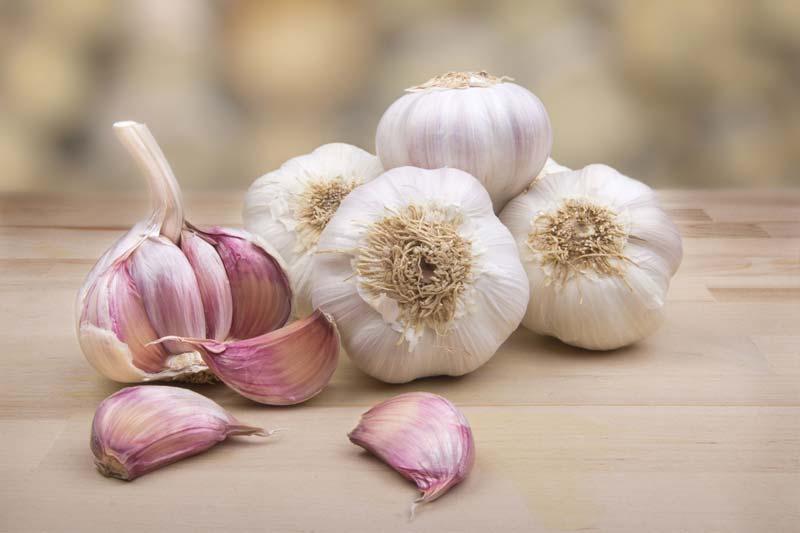 teste di aglio